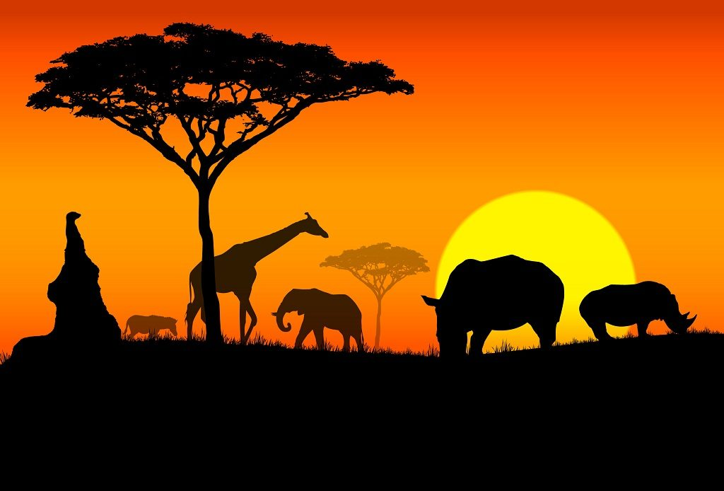 Beautfiul Africa